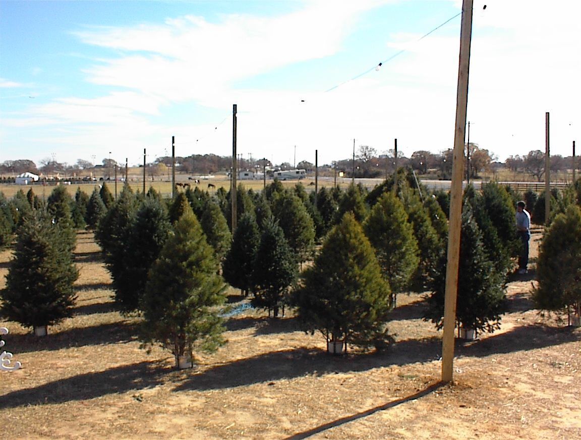 hundreds of trees to choose from daily